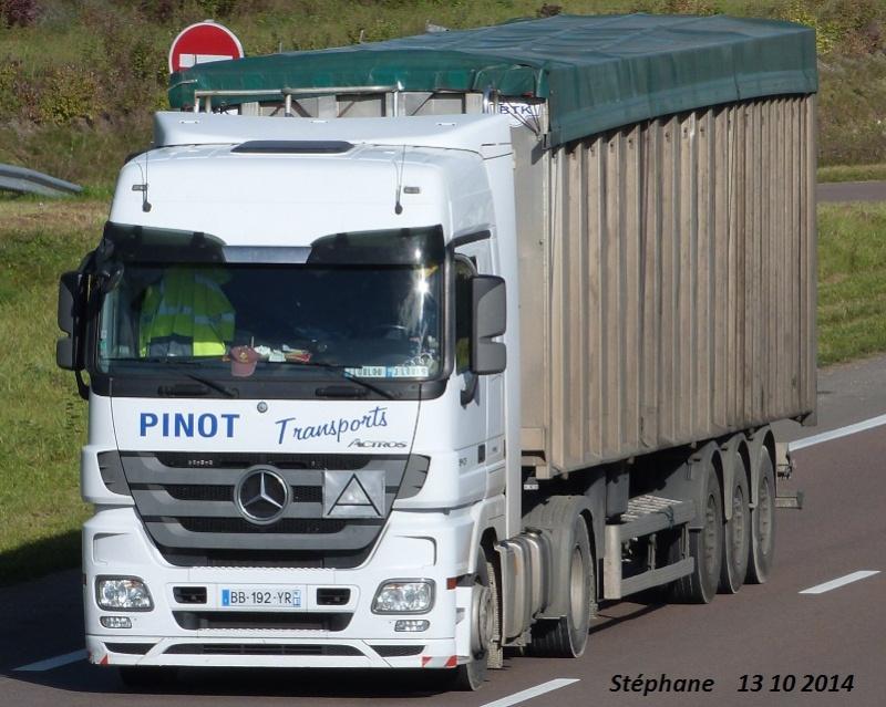 Pinot (Gauville) (61) P1280619
