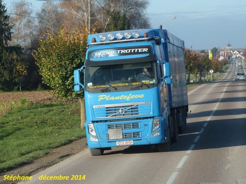 Plantefeve (Heuvelland) P1290523