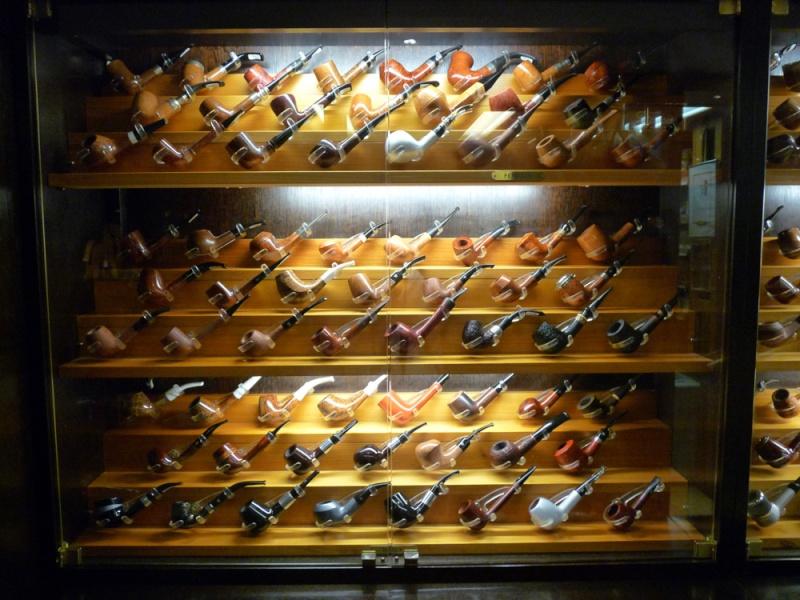 Les civettes de Vienne (Autriche) P1170657