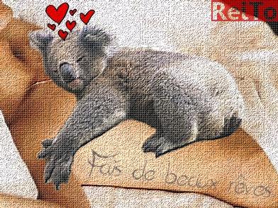 Absences - Page 9 Koala_10