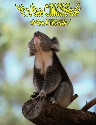 Absences - Page 9 Koala_13