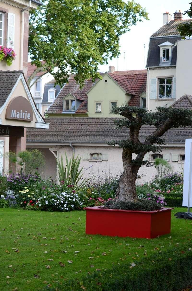 Mulhouse capitale mondiale du Bonsaï Dsc_2810