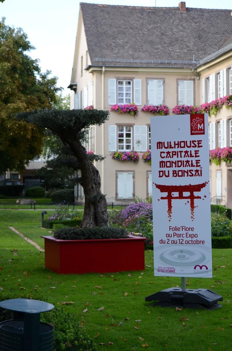 Mulhouse capitale mondiale du Bonsaï Dsc_2811