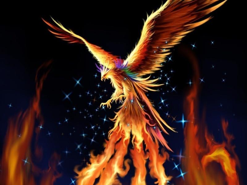 -= Phoenix LoA =- ( Nouveau Forum )