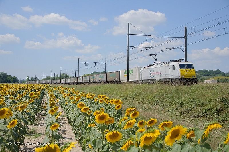 Photos et vidéos de la ligne Bordeaux - Toulouse - Narbonne - Sète (Fil 3) - Page 23 _dsc8012