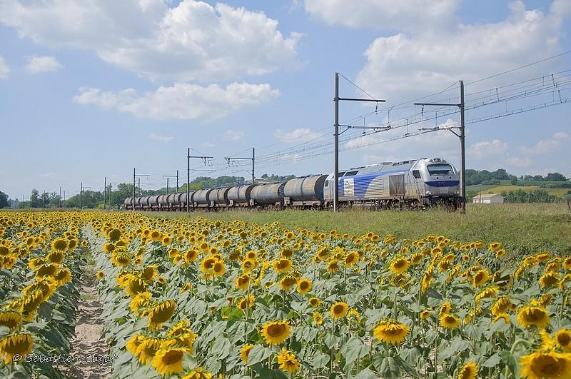 Photos et vidéos de la ligne Bordeaux - Toulouse - Narbonne - Sète (Fil 3) - Page 23 _dsc8013