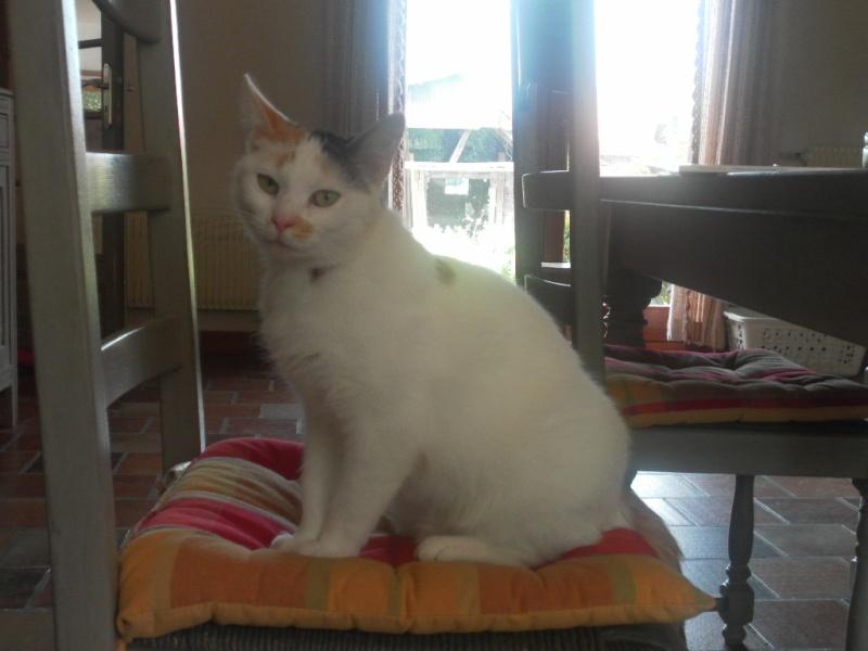 Poussy - 7 mois - 10-09-10