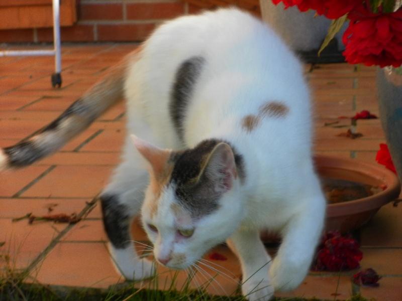 Poussy - 7 mois - 29-06-11