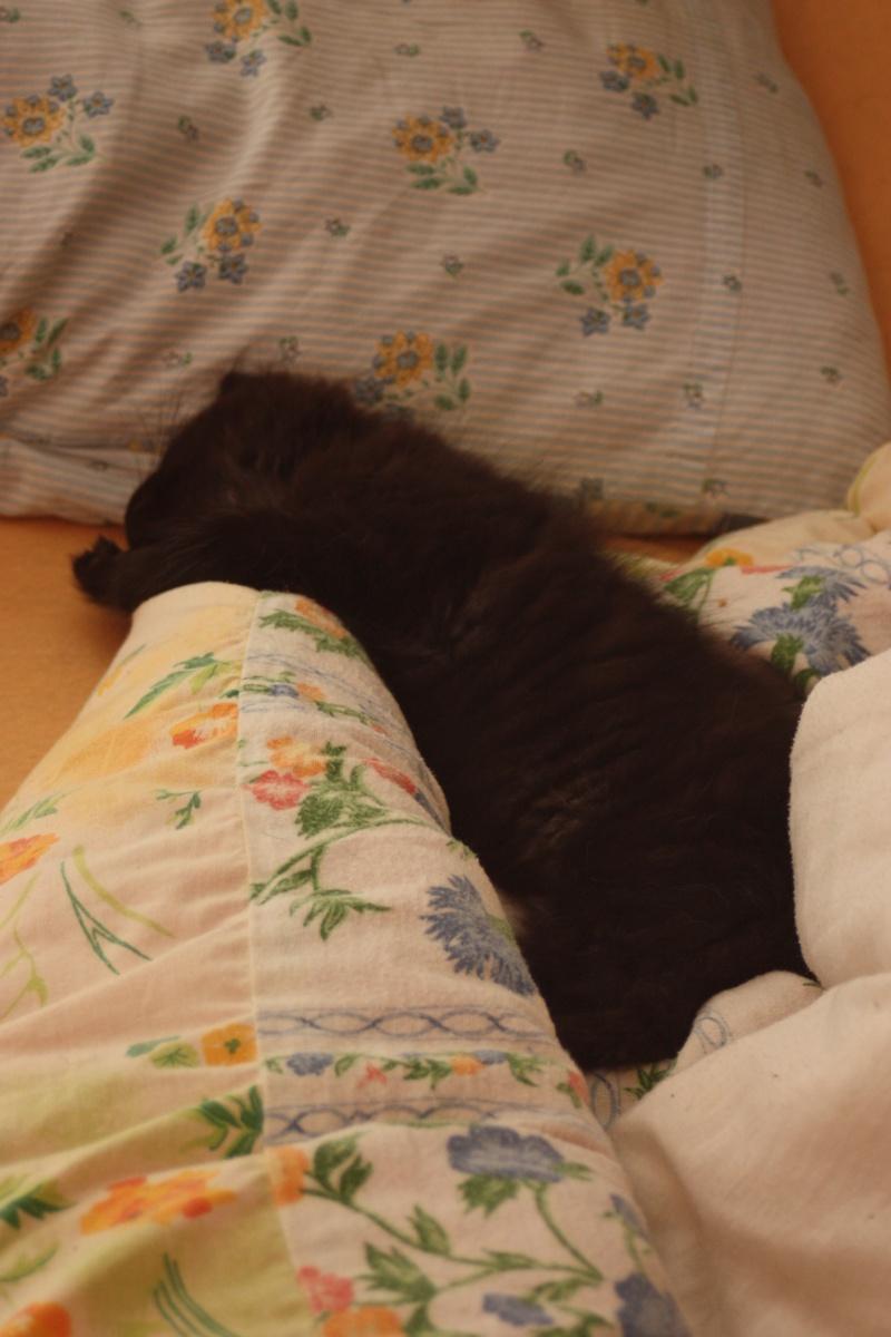 Jingle,chaton angora mâle né le 20 mars  Img_0711
