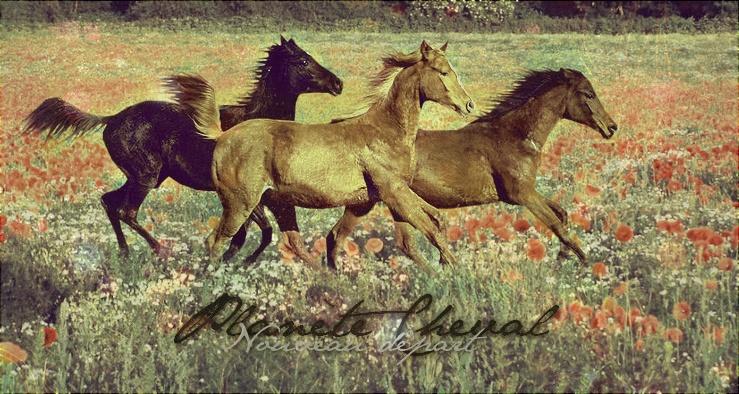 Planète cheval Fsjsfj11
