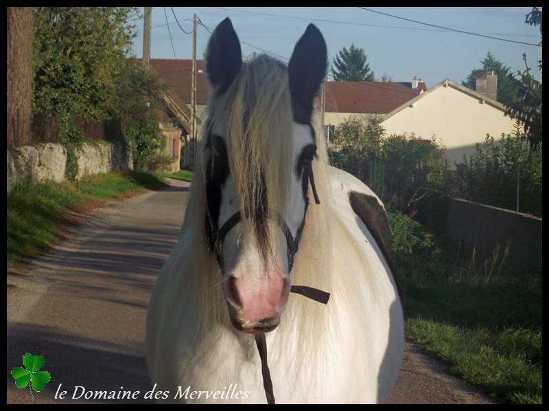 Domaine des Merveilles 31_oct24
