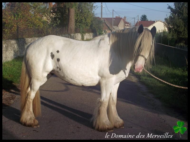 Domaine des Merveilles 31_oct26