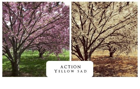 اكشن ذهبي على الصور - اكشن احترافي  - صفحة 2 Action10