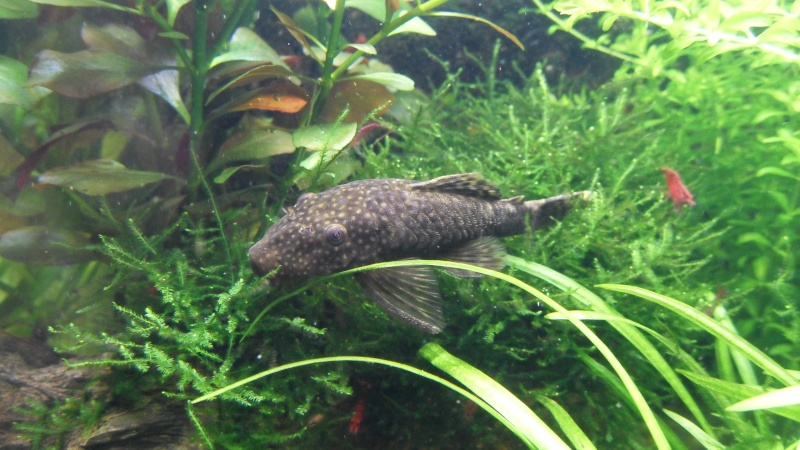 mon aquarium 96 litres - Page 3 Sdc10213