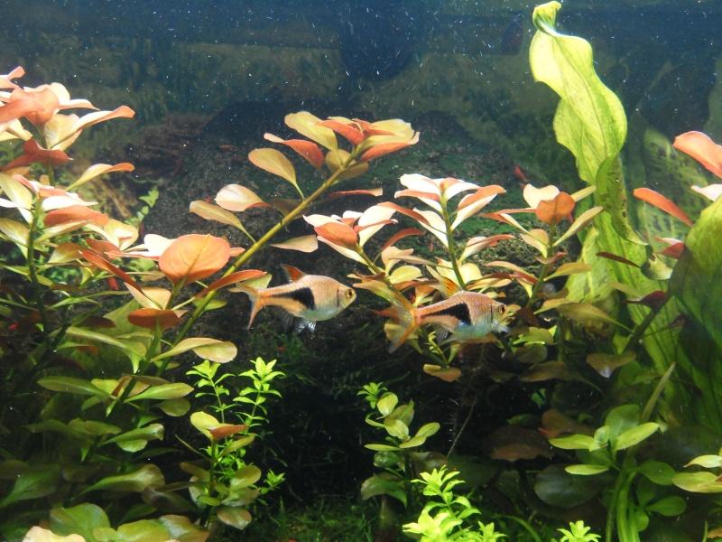 mon aquarium 96 litres - Page 3 Sdc10411