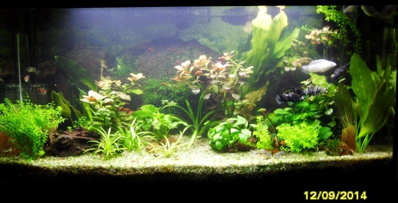 mon aquarium 96 litres - Page 3 Sdc11010