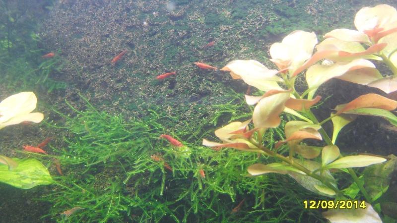 mon aquarium 96 litres - Page 3 Sdc11011