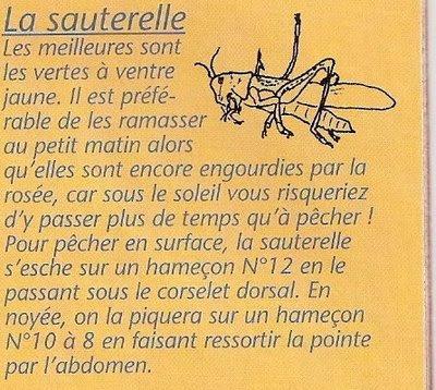 sauterelles Sauter10