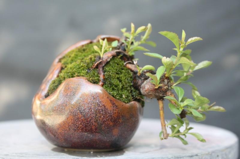 some new pots ... Kusamo13