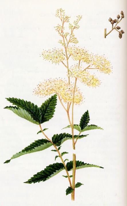 [Challenge] Identification de plantes sauvages avec votre guide Reine_10