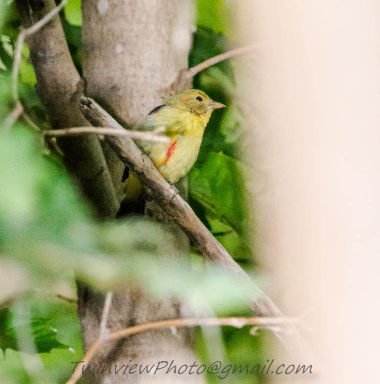 oiseau inconnu 002_2410