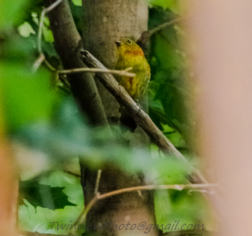 oiseau inconnu 002_2411