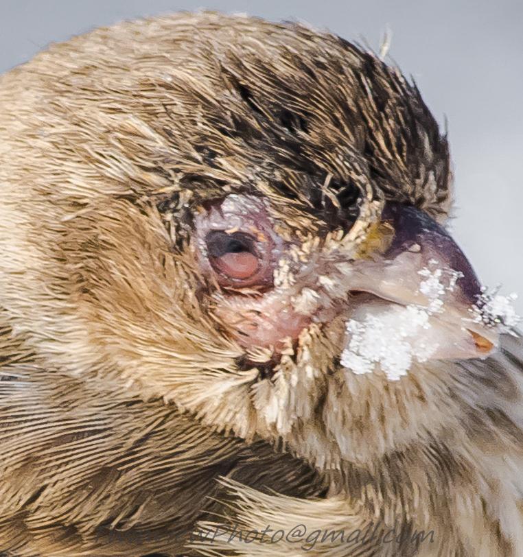 Oiseau malade? Dsc_3611