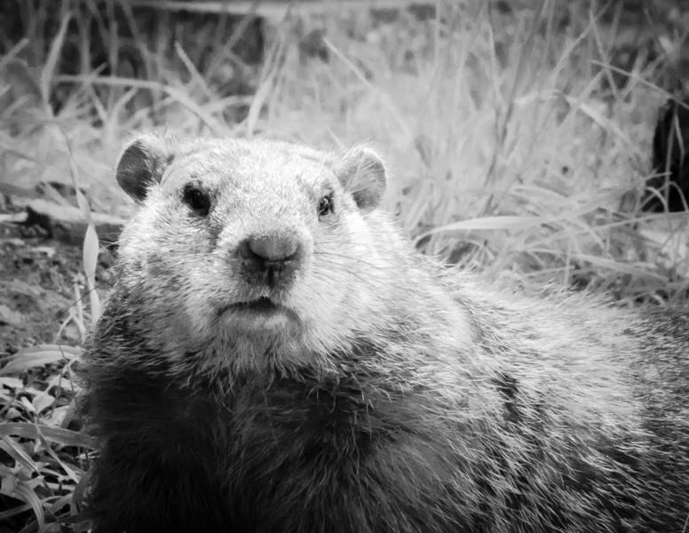 Marmotte style infrarouge Dsc_7814