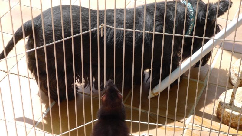 VALSE, femelle noire de 7 ans chez MYA FRAY dans le Var - Page 26 25_06_10