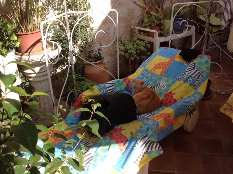VALSE, femelle noire de 7 ans chez MYA FRAY dans le Var - Page 26 Mois_d11