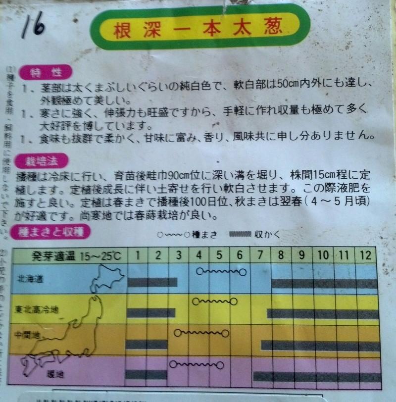 Japanese Long Onion (Naga Negi) Naga_n14