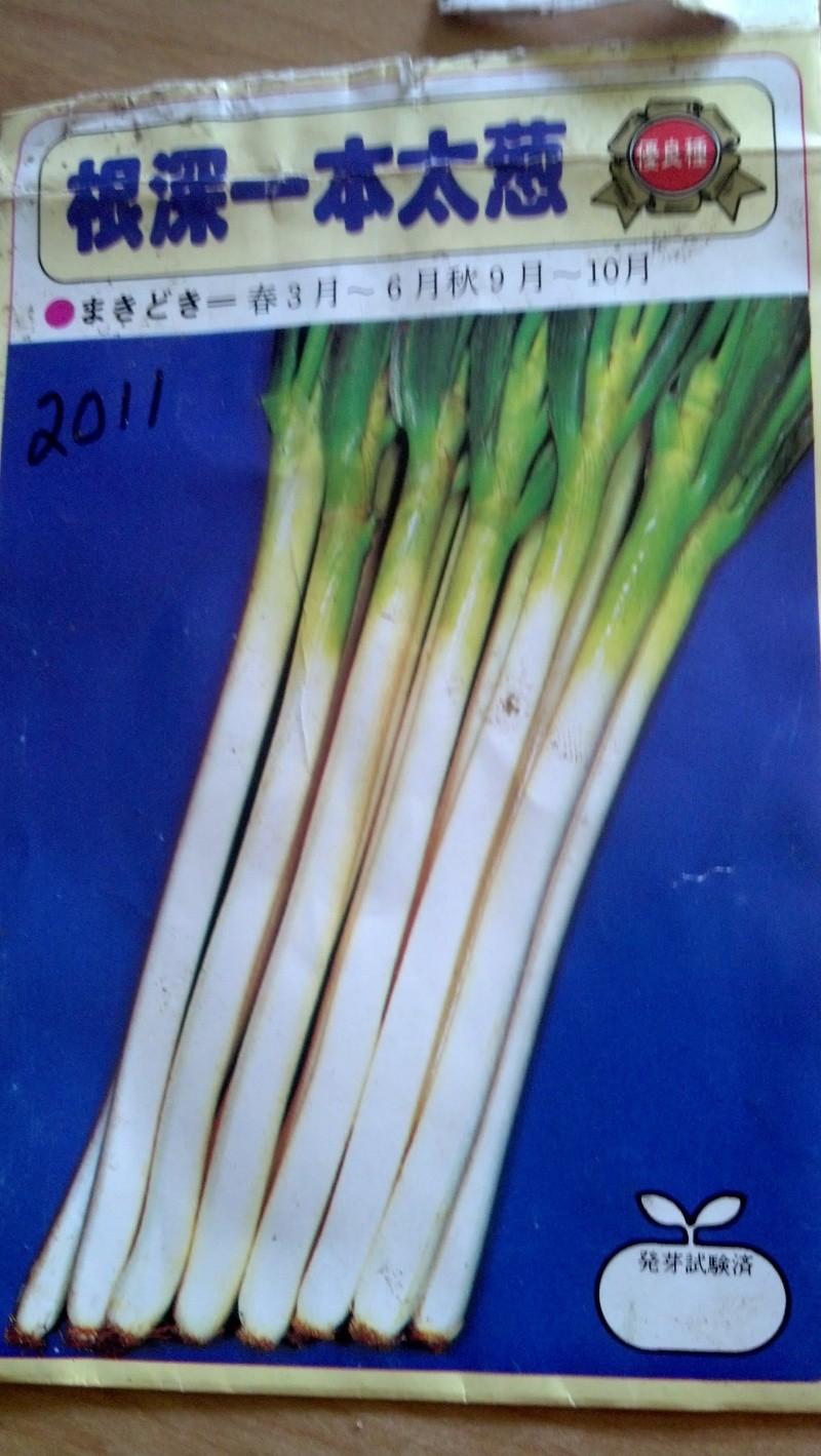 Japanese Long Onion (Naga Negi) Naga_n16