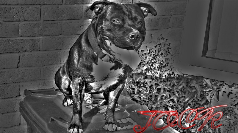 JOCK Picsar10