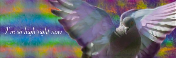 jeux du flood - Page 3 Pigeon10