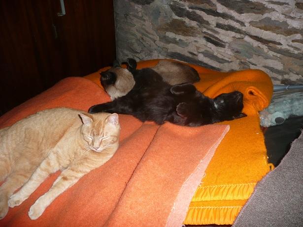 Minuit chat noir Mai 2012 FIV+ (ADPK 35) P1190310