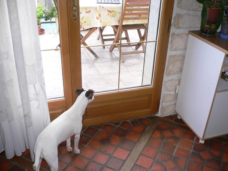 Sciage mixte bois/alu sur des fenêtres bois rénovées en fenêtres aluminium Vue_in10