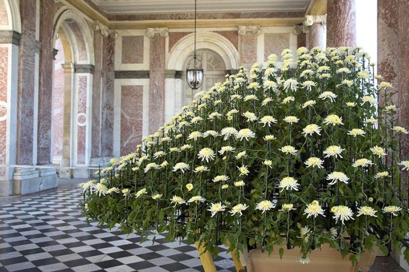 Versailles expose des chrysanthèmes japonais en 2014 Japon210