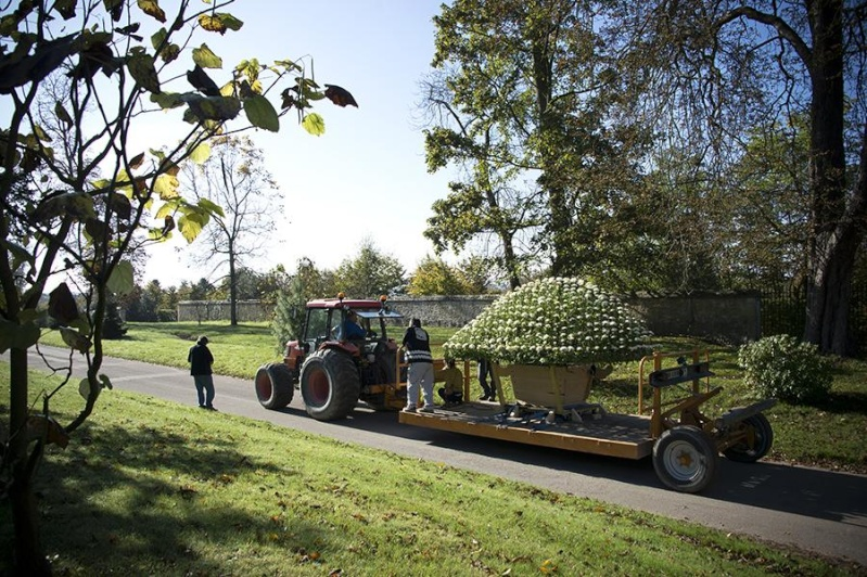 Versailles expose des chrysanthèmes japonais en 2014 Japon211