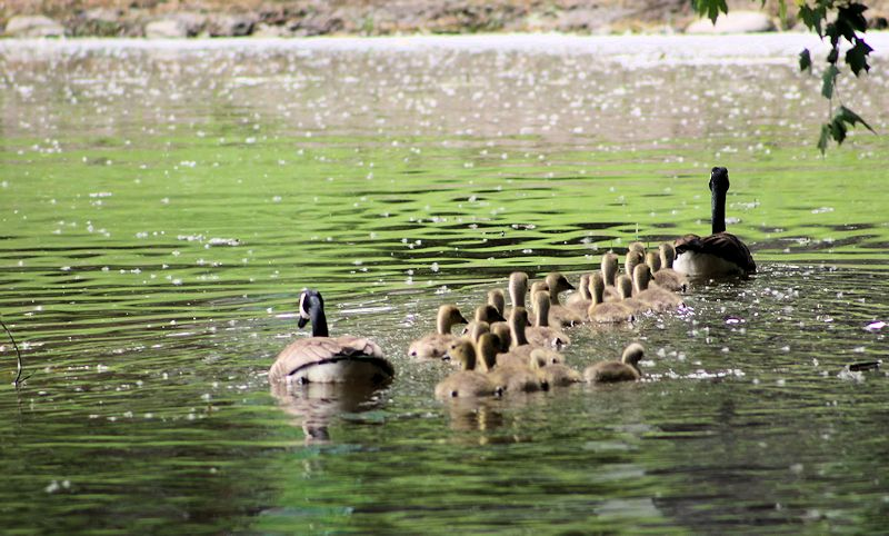 Quelle famille! Img_1814