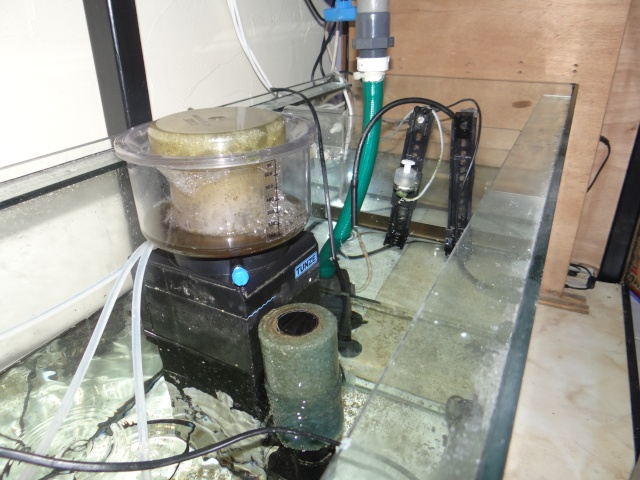 Le 468 litres récifal à Coli Dsc02415