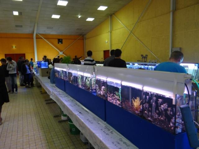 Bourse à Sarreguemines -  Dimanche 12 Octobre 2014 Dsc03412