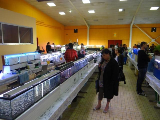 Bourse à Sarreguemines -  Dimanche 12 Octobre 2014 Dsc03413
