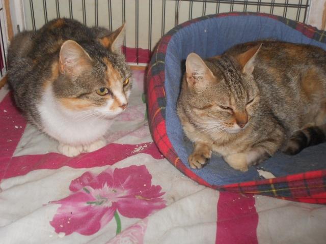 Ava tricolore et Amber tricolore et blanche - nées en 2011 e Dscn3510