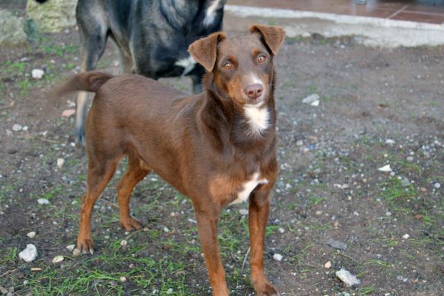 Canis - Golfo Dsc_0062