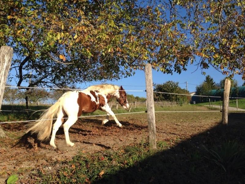 Jeune Paint horse- a archiver 10711310