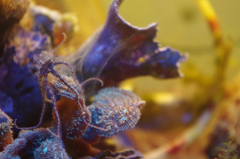Starfish Spawning O.o Imgp0111