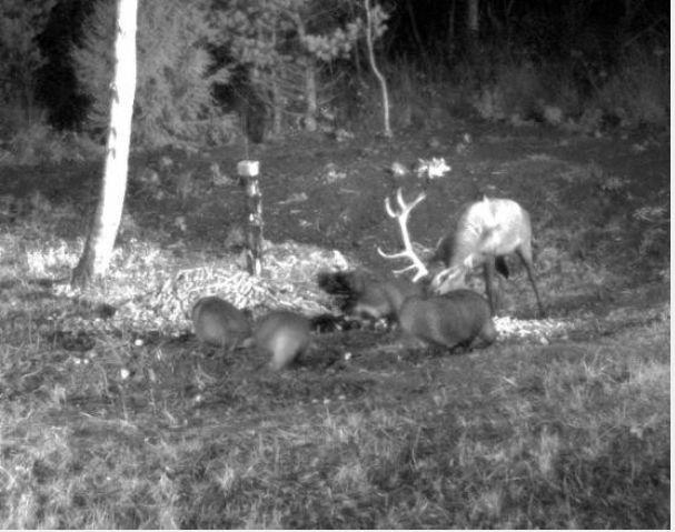 Wildtier-Livecams - Seite 3 Hirsch10