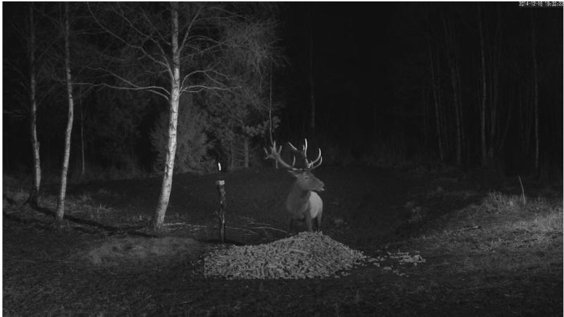 Wildtier-Livecams - Seite 6 Hirsch11