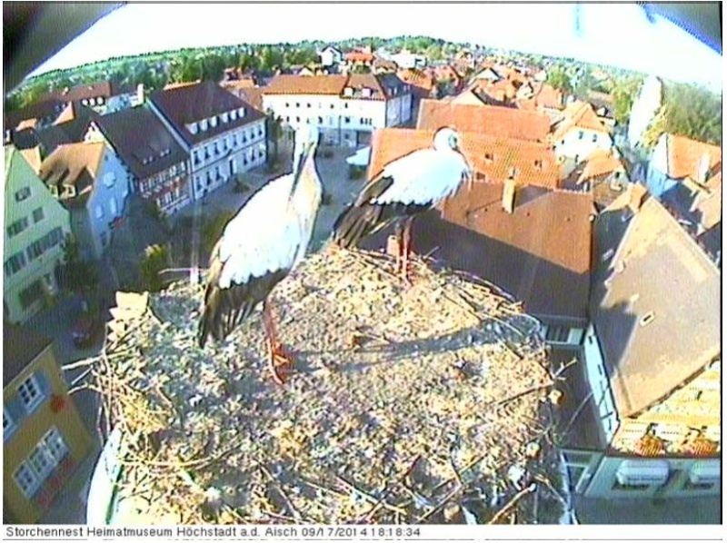 Wildtier-Livecams Storch12
