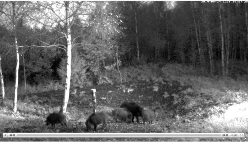 Wildtier-Livecams Wutz110